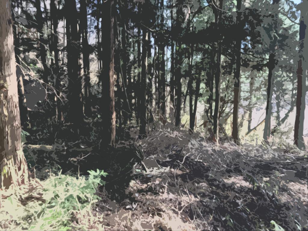 フリー素材背景【山林】