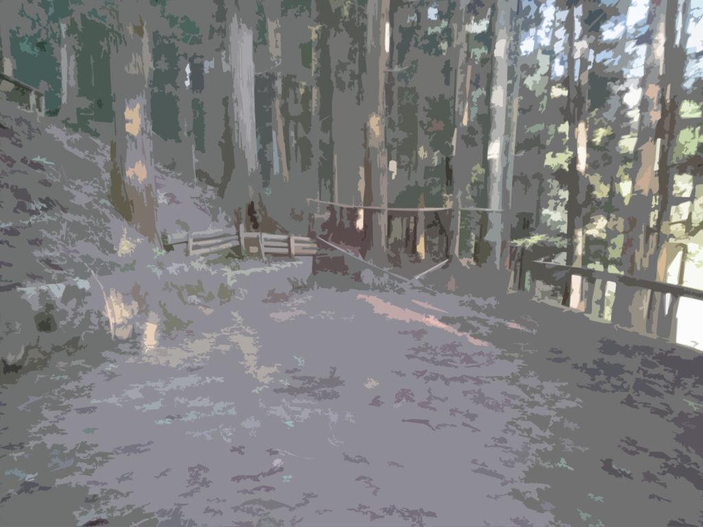 フリー素材背景【整地された森】