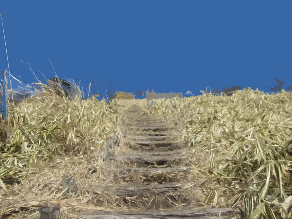 フリー素材背景【登山道の階段(上り)】